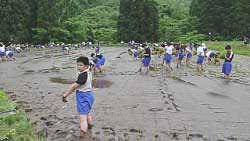 足立区中学生による田植え体験