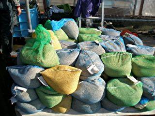 魚沼産コシヒカリの種子の袋詰