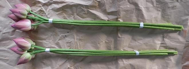 ハスの花の5本セット